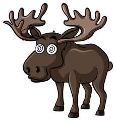 Brown moose with dizzy face