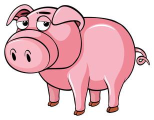 Pig with sleepy eyes
