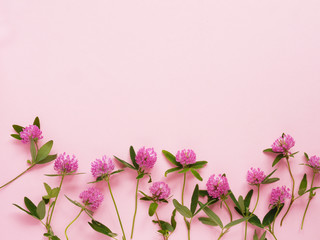 Flower pattern of wildflowers. Composition of flowers and plants. Top view. Floral abstract background. Flower concept. Clover flowers on a pink background.