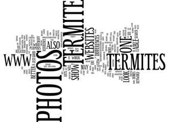 TERMITE PHOTOS Text Background Word Cloud Concept