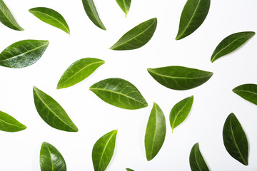 Green leaves on white background composition