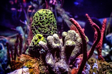 Background image of colorful reef