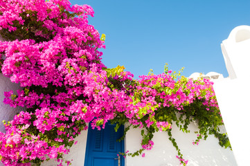Foto auf AluDibond Rosa White-blue architecture and pink flowers