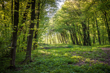 Green summer forest with strong vegetation