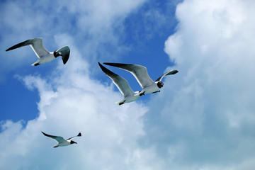 Seagulls flying against a blue sky with clouds