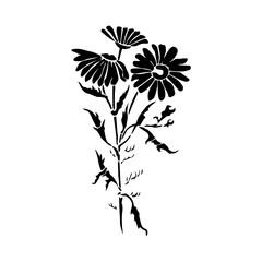 Daisy silhouette black