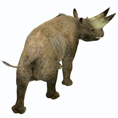 Arsinoitherium Mammal Tail - Arsinoitherium was a herbivorous rhinoceros-like mammal that lived in Africa in the Early Oligocene Period.