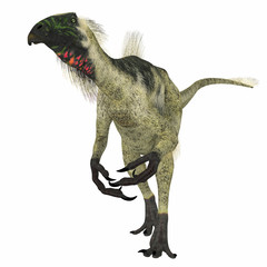 Beipiaosaurus Dinosaur on White - Beipiaosaurus was a herbivorous theropod dinosaur that lived in China in the Cretaceous Period.