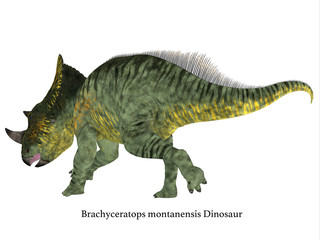 Brachyceratops Dinosaur Tail with Font - Brachyceratops is a herbivorous Ceratopsian dinosaur that lived in Alberta, Canada and Montana, USA in the Cretaceous Period.