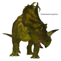 Centrosaurus Dinosaur Neck Frills with Font - Centrosaurus is a herbivorous Ceratopsian dinosaur that lived in Canada in the Cretaceous Period.