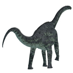 Cetiosaurus Dinosaur Tail - Cetiosaurus was a herbivorous sauropod dinosaur that lived in Morocco, Africa in the Jurassic Period.