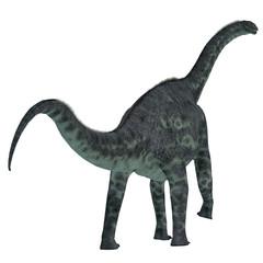 Cetiosaurus Dinosaur Tail - Cetiosaurus was a herbivorous sauropod dinosaur that lived in Morocco, Africa in the Jurassic Period.