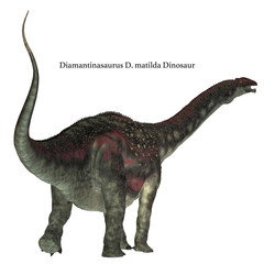 Diamantinasaurus Dinosaur Tail with Font - Diamantinasaurus was a herbivorous sauropod dinosaur that lived in Australia during the Cretaceous Period.