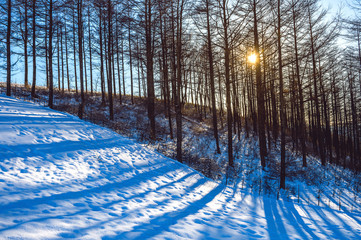 Wall Mural - Landscape in a winter forest at sunset.
