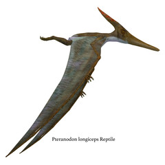 Pteranodon Reptile Side Profile with Font - Pteranodon was a flying carnivorous reptile that lived in North America in the Cretaceous Period.