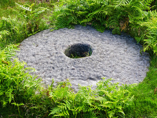 On a woodland floor lays a long abandoned millstone surrounded by ferns and grass.