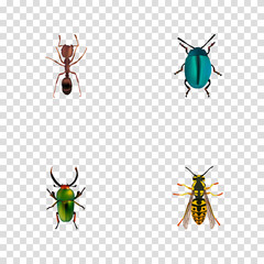 Realistic Bee, Bug, Emmet And Other Vector Elements. Set Of Bug Realistic Symbols Also Includes Blue, Emmet, Bug Objects.