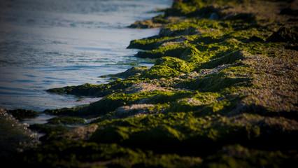 Green Seaweed on beach