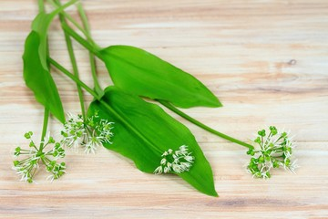 Buckrams, also  ramsons, broad-leaved garlic,  wood garlic, bear leek