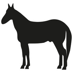 Vector image of a horse. The horse is silent.
