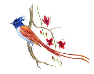 Fototapeta premium Rajski ptak na gałąź egzotyczna roślina z kwiatami, akwarela rysunek na białym tle.