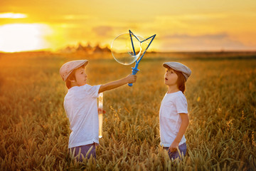Two children, boys, chasing soap bubbles in a wheat field on sunset