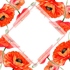 Wildflower poppies flower frame in a watercolor style. Full name of the plant: poppies. Aquarelle wild flower for background, texture, wrapper pattern, frame or border.