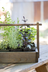 Decorative wooden box with individual herb plants