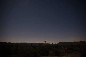 Starry sky behind joshua trees