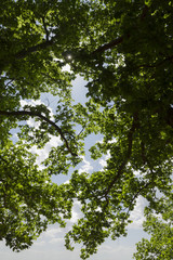 Leaves and Branches Against Sky