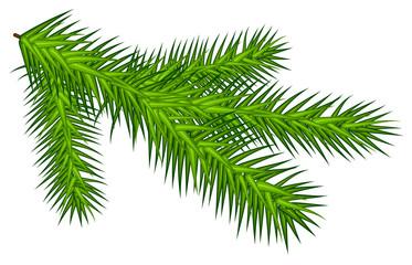 Green juicy one spruce branch