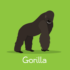 African gorilla illustration design on green background.vector