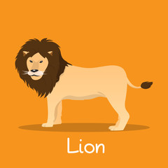 Lion  flat vector African wildlife. Wild animal illustration for zoo