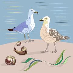Gulls, seashells, seaweed and sea.
