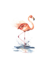 Hand drawn pink flamingo created by watercolor.