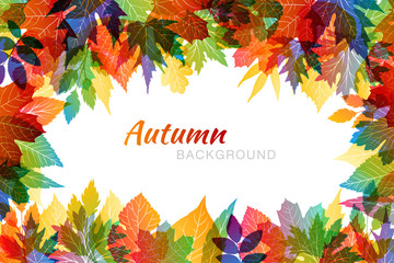Autumn colorful background with various leaves in transparent overlay style.