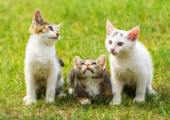 Three cute kittens on the grass