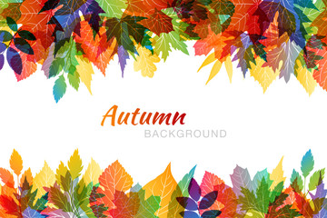 Autumn colorful background with various leaves in transparent overlay style. Horizontal borders