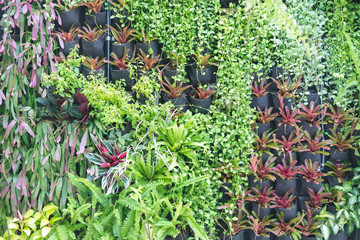 Various of green plants wall decoration. Beautiful Nature background