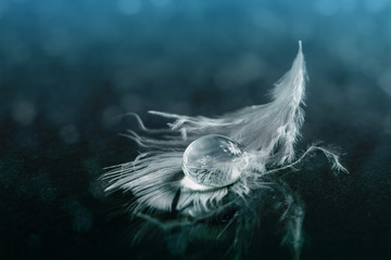 Drop of water on white feather