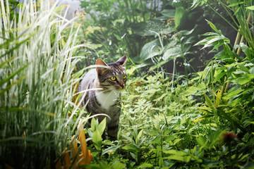Gray cat walks among the green grass in the garden