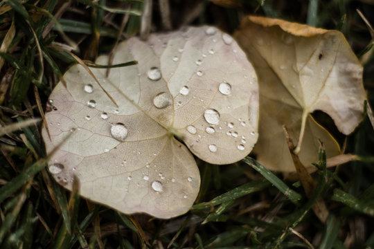 Rain on my leaves