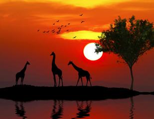 paisaje salvaje con animales