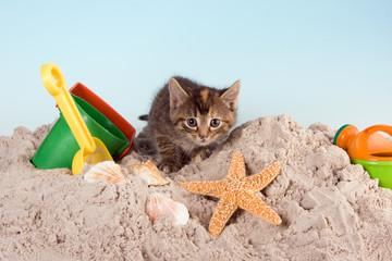 Kitty on a beach