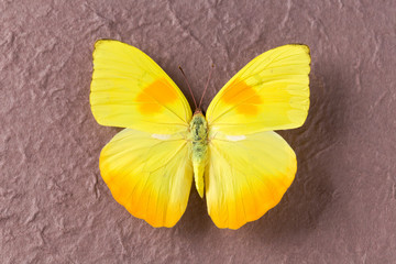 Closeup of yellow butterfly