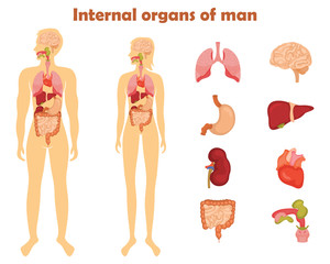 Human internal organs icon set. Vector illustration in cartoon style isolated