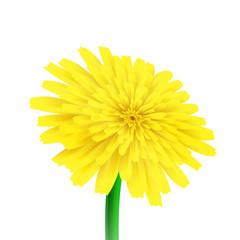 Realistic vector flower