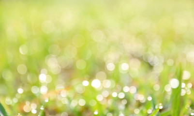 Bokeh green Refreshing nature background