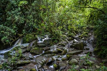 Kolibri im Reserva Natural Acaime nahe Salente, Zona Cafetera, Kolumbien