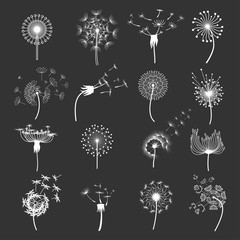 Dandelion flower set